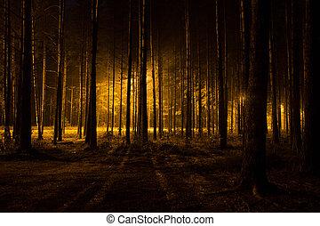 암흑, 숲