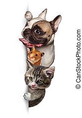 애완 동물, 그룹, 수직선, 표시