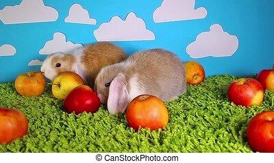 애플, 토끼, 토끼, 귀여운, 동물, 동물, 먹다, 사과