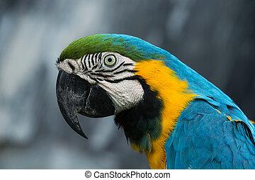 앵무새, 새