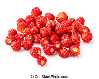 야생 딸기