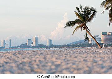 야자수, 통하고 있는, 바닷가, 에서, 해돋이