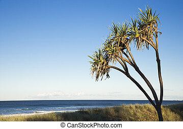 야자수, 통하고 있는, 해변.