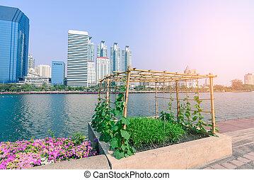 야채, 농원, 에서, 도시의, garden.