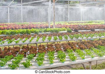 야채, 농장