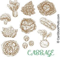 양배추, 밑그림, 벡터, 야채, 아이콘