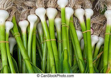 양파, 농부, 봄, 은 묶는다, 신선한, 시장