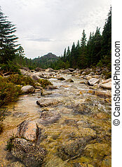 얕은, 강, 에서, 그만큼, 숲, 2