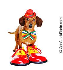 어릿광대, 개, 입는 것, 혼자서 젓는 길쭉한 보트, 구두