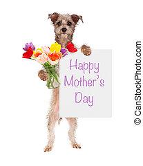 어머니, 튤립, 개, 표시, 보유, 일, 행복하다