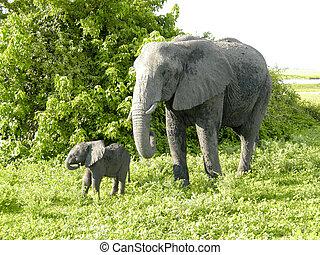 엄마와 아기, 아프리카의 코끼리, 보츠와나, 아프리카.