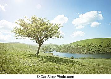 여름날, 나무