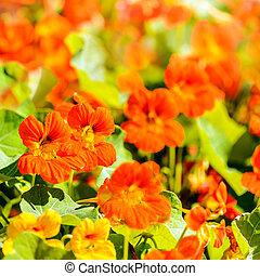 여름, 꽃, 패턴
