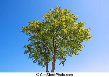 여름, 나무