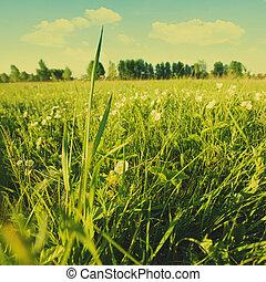 여름, 목초지, 자연의 아름다움, 일, 조경술을 써서 녹화하다