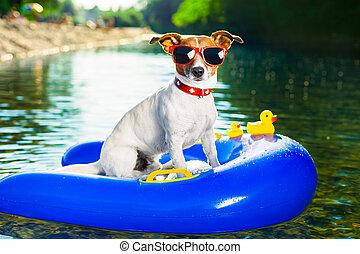 여름, 바닷가, 개