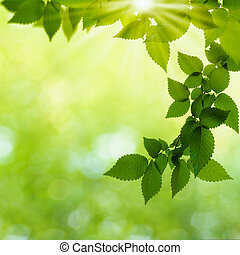 여름, 제자리표, 떼어내다, 배경, 숲, 일