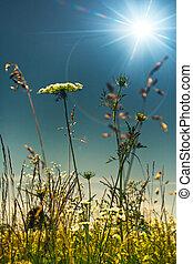 여름, 통하고 있는, 그만큼, 목초지, 떼어내다, 제자리표, 배경