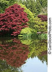연못, 나무