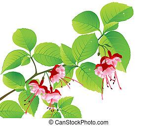 열대적인, 녹색, 꽃피는 나무, 가지