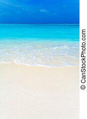 열대적인, 여름, 바닷가, 조경술을 써서 녹화하다