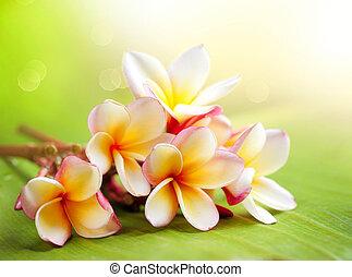 열대적인, 협죽도과의 관목, plumeria, flower., 광천