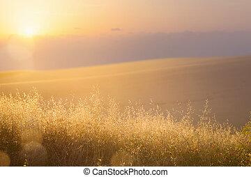 예술, 떼어내다, 구월, 명란한, 가을, 목초지, 배경