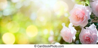 예술, 떼어내다, 봄, 또는, 여름, 꽃의, 배경