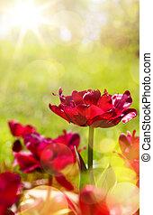 예술, 봄, 꽃의, 배경