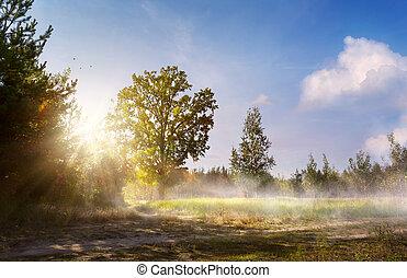 예술, 아름다운, 조경술을 써서 녹화하다, 와, 늙은, 숲, 벤치, 와..., 큰, 오크 나무, 통하고 있는, 그만큼, 숲, glade
