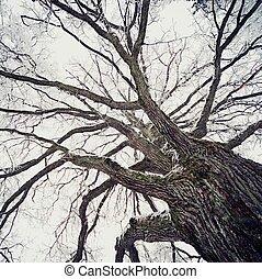 오래되었던 나무