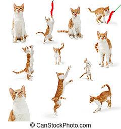 오렌지, 쾌활한, 귀여운, cate, 수집