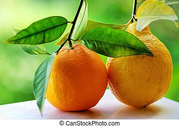 오렌지, lemon.