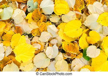 오리나무 나무, 가을은 떠난다, 배경