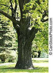 오크 나무