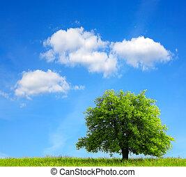 오크 나무, 통하고 있는, 녹색 분야