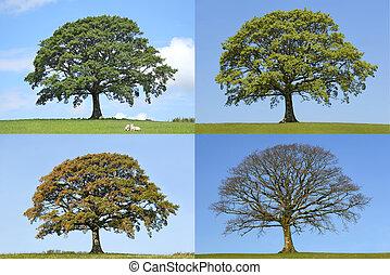 오크 나무, 4 절기