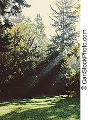 완전히, park., 나무, 빛나는, 태양