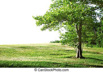 외로운, 나무