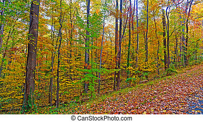 우리, 국가의 식물원, 에서, 그만큼, 가을, 워싱톤, dc., 길, 틀에 낀, 얼마 만큼, 다채로운, 가을의 잎, 에서, 그만큼, 조밀한, thicket.