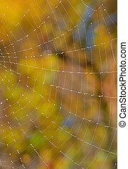 웹, 클로우즈업, 숲