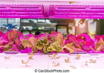 유기체의, hydroponic, 야채, 생장하다, 와, 이른다, 빛, 옥내의, 농장, 기술