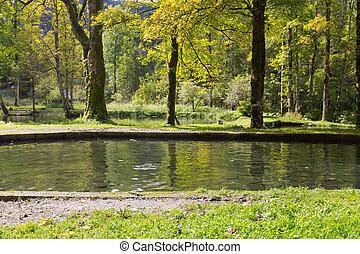 유럽, fish, 가을, 바다에서는 서투른, 동안에, 수영, 독일, 송어