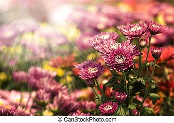 은 점화한다, 꽃, 광선