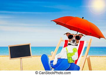 의자, 바닷가, 개, 칵테일
