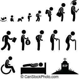 인간의 삶, 아기 아이, 학생, 늙은