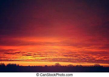 일몰, 위의, 구름, 빨강, 나무.
