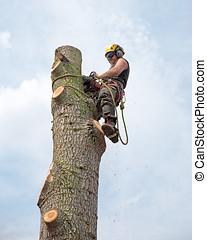 일, 나무 외과의