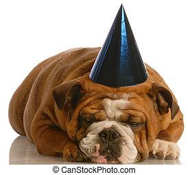 입는 것, 당 모자, 개