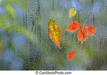 잎, 가을, 비가 오는, 창문, 유리